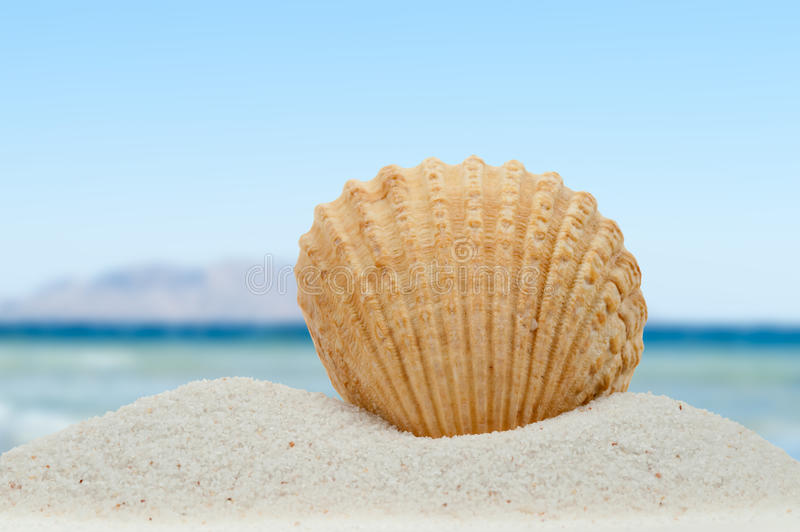 Sea shell on the beach. Sea shell in summer on the beach royalty free stock photo