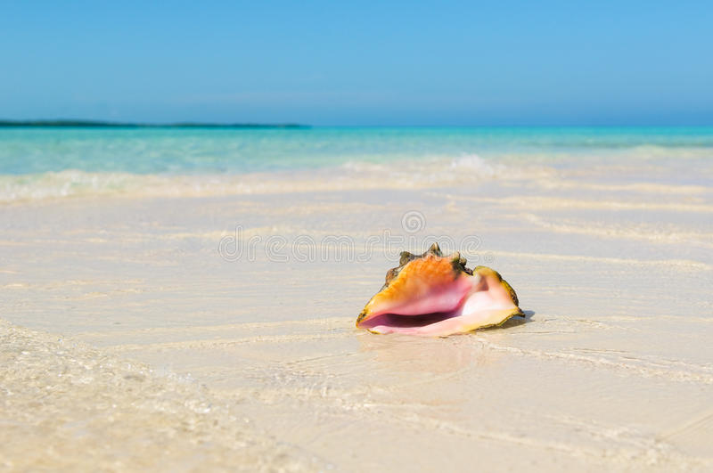 Sea shell in the beach. Beautiful pink sea shell in the beach stock image