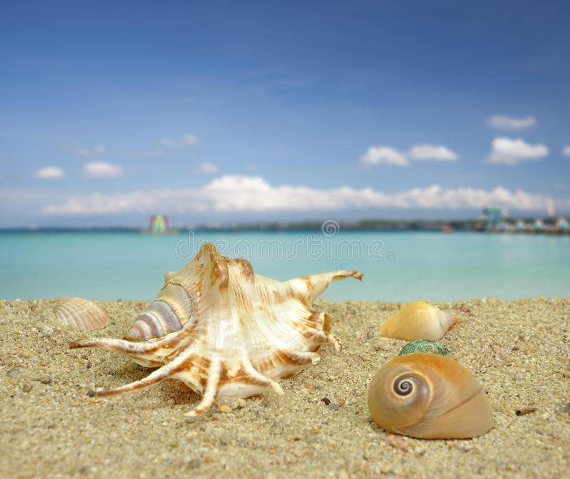 Download Sea shell on the beach stock photo. Image of holiday - 26556246