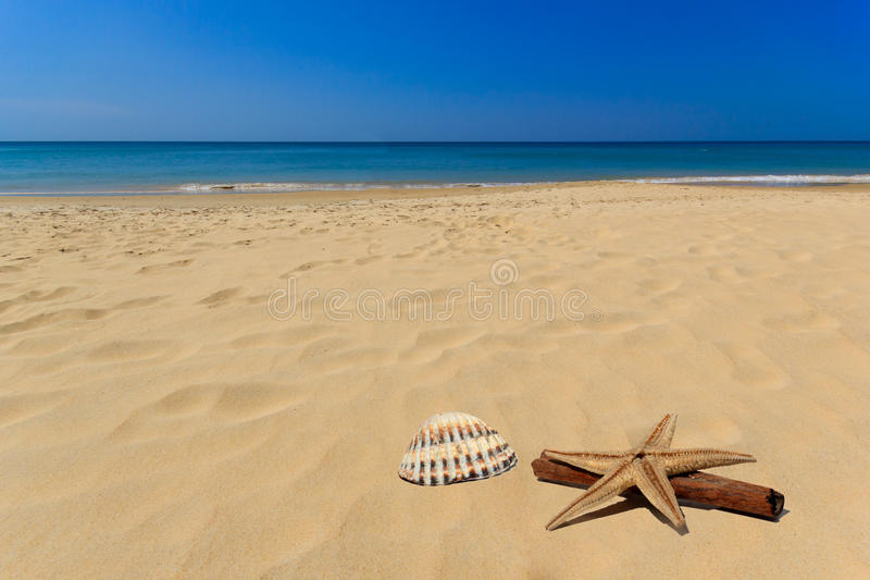 Sea shell in the beach. Sea and shell on the beach royalty free stock images
