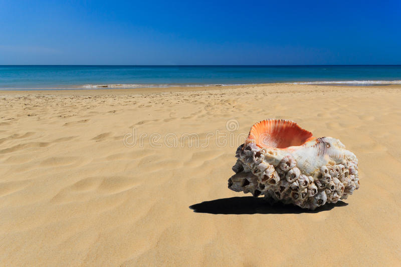 Download Sea Shell In The Beach Royalty Free Stock Photo - Image: 29294055