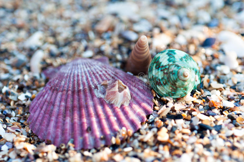 Sea shell. On the beach stock images