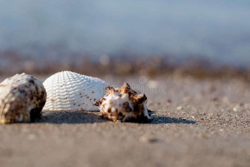 Sea Shell by the beach. Seashell, Beach stock photography