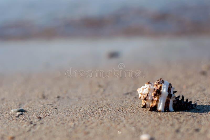 Sea Shell by the beach. Seashell, Beach stock images
