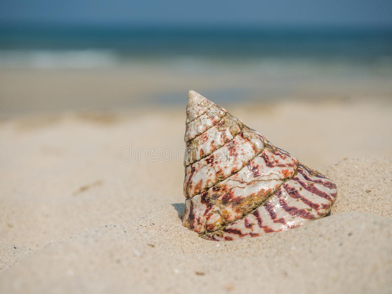 Sea shell on the beach. Sea shell on the beautiful tropical beach royalty free stock images