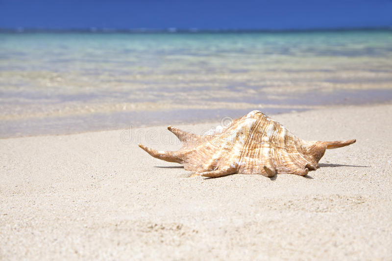 Sea Shell. At the beach in Belle Mare, Mauritius. Sunny weather stock photo