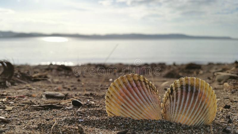 Sea shell at the beach royalty free stock images