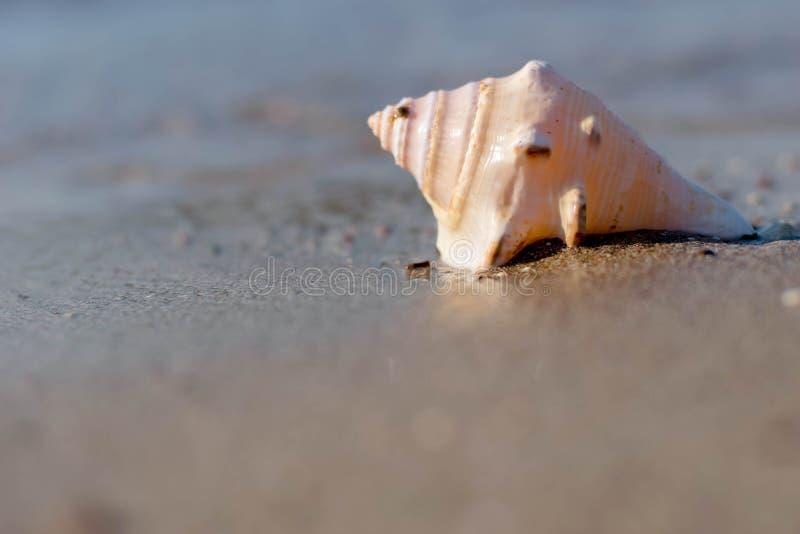 Sea Shell by the beach. Seashell, Beach royalty free stock photo