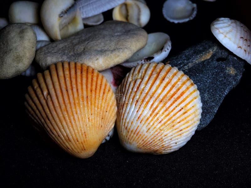 Sea shell. On black background stock photos