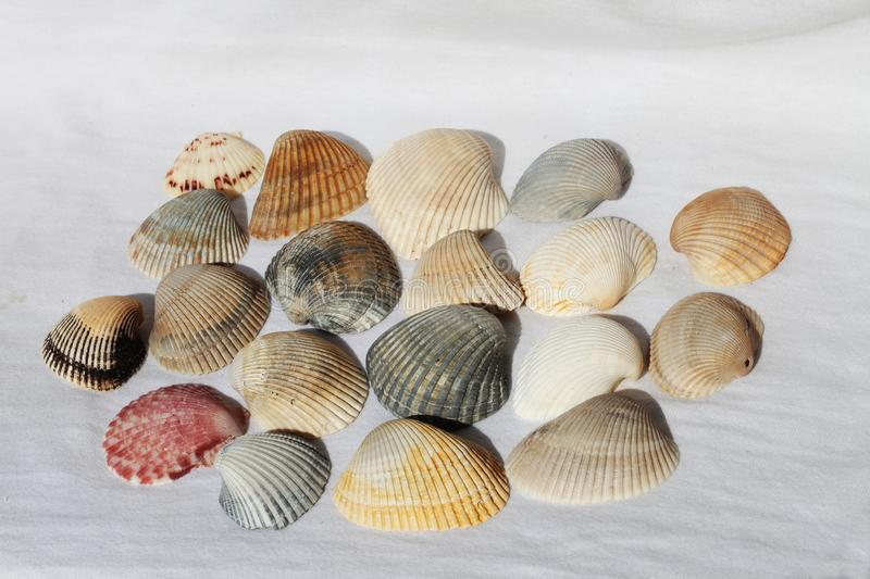 Sea shell. On the black & white background royalty free stock images