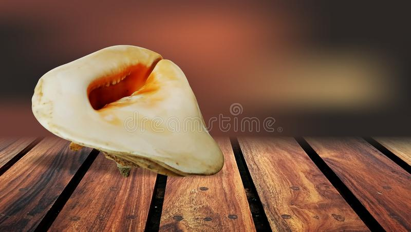 Sea Shell brown Wood table Background. stock photo
