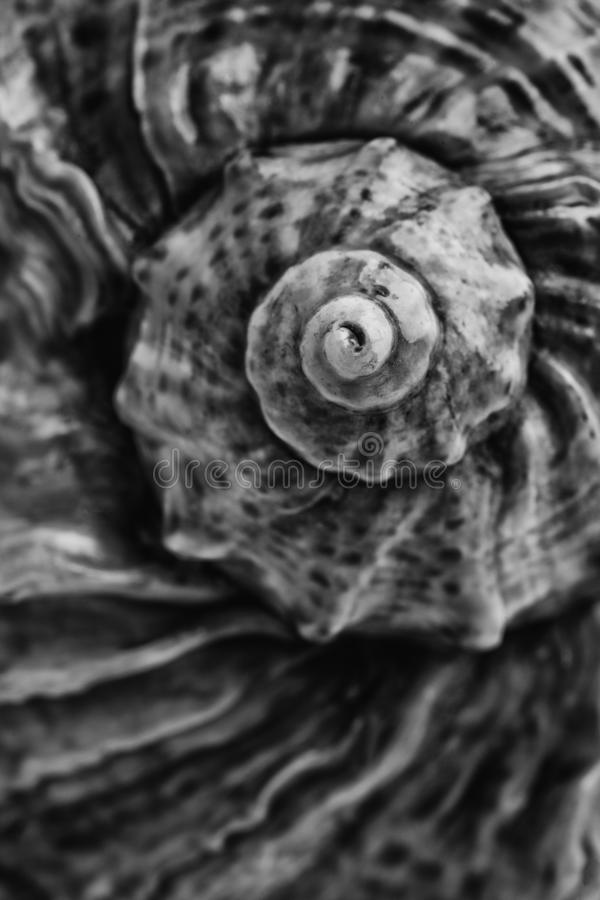 Sea shell close-up royalty free stock photography