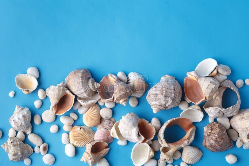 Sea shell closeup on blue background stock photo