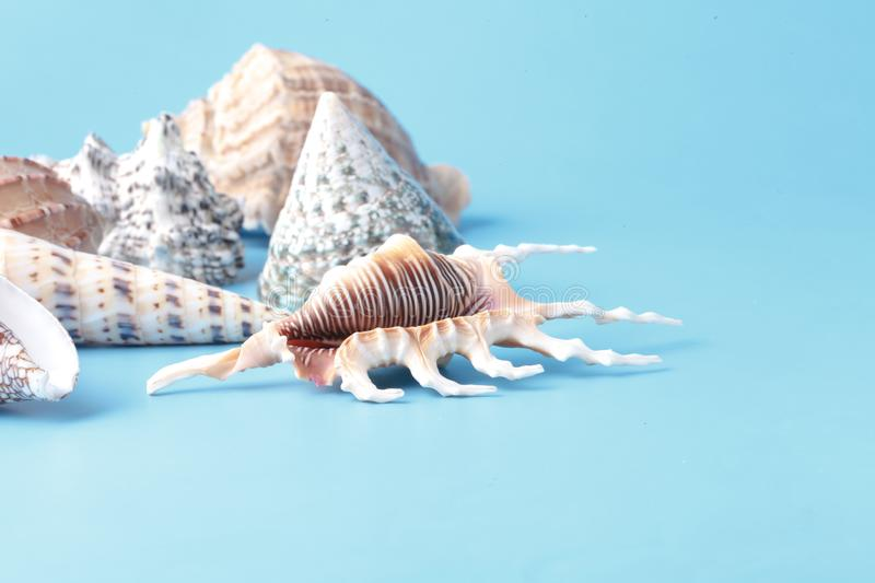 Sea shell closeup on blue background stock images