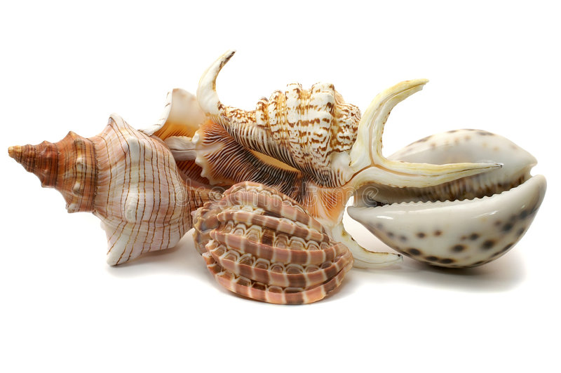 Sea-shell collection. Isolated on white royalty free stock photo