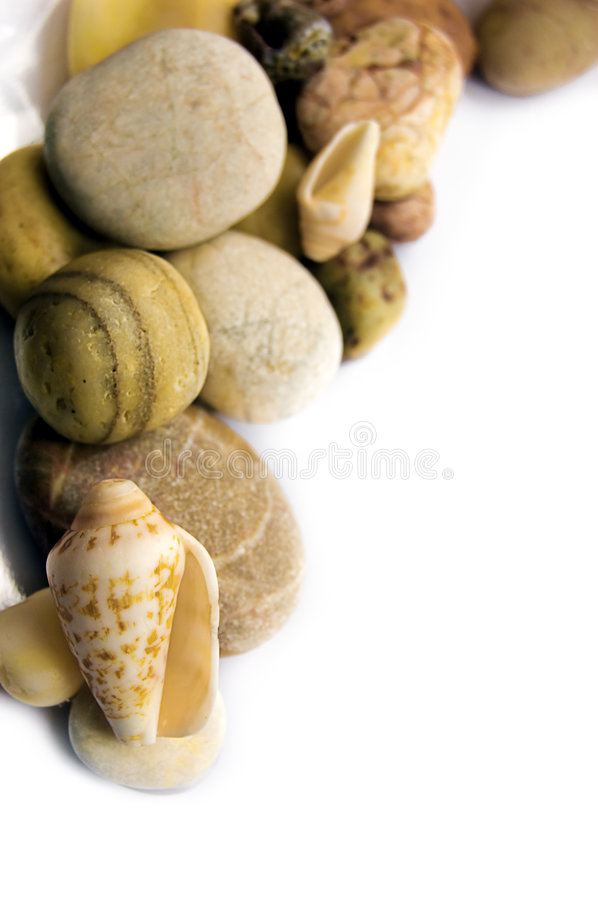 Download Sea shell collection stock photo. Image of assorted, closeup - 7988952