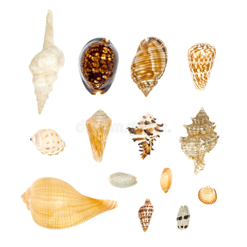 Sea Shell Collection Set on white background royalty free stock images