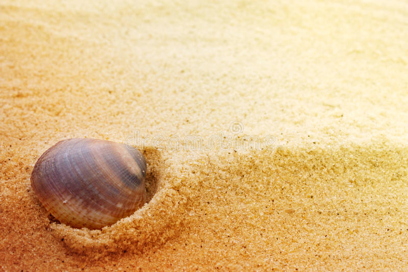 Sea shell on fine sand. Sea shell background on fine golden sand with copyspace stock images