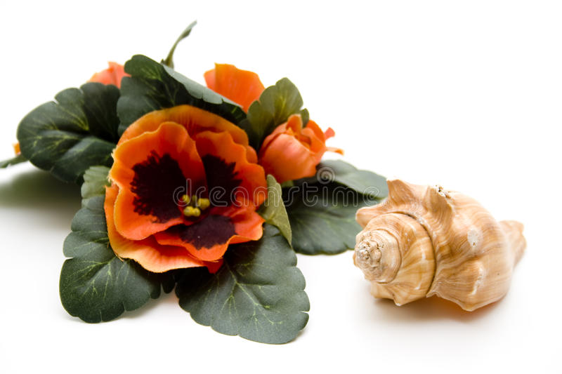 Sea shell with floral decoration royalty free stock image