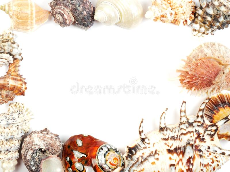 Sea shell frame. Frame from seashells over white, with copy space royalty free stock photo