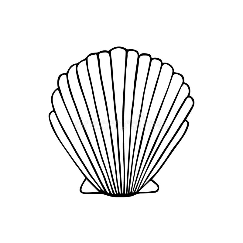 Image result for sea shell scallop drawing