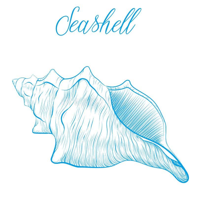 Sea shell Hand drawn blue linear vector illustration.Marine wild vector illustration
