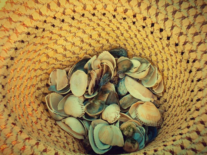 Sea shell in hat stock photography