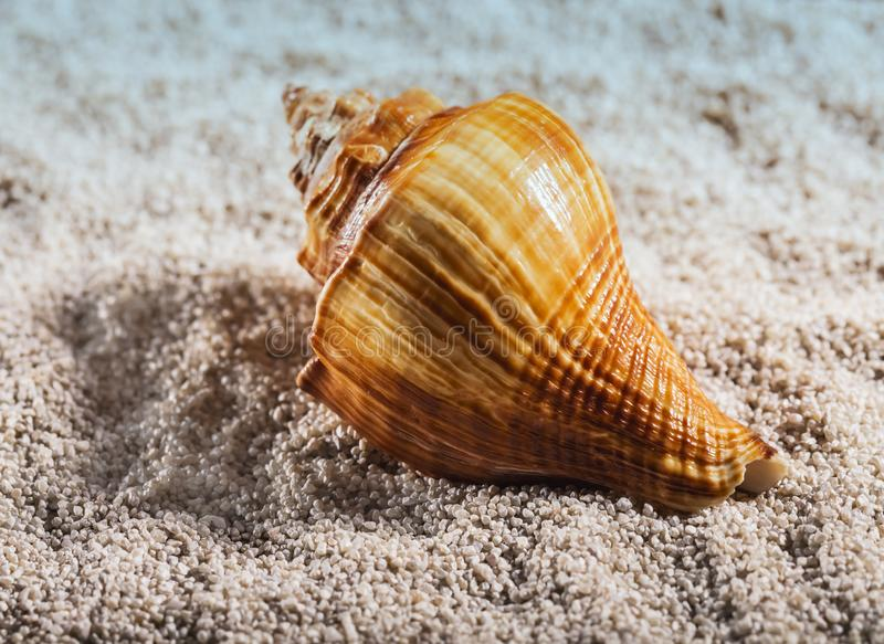 The sea shell is lying on a white pebble.  stock image