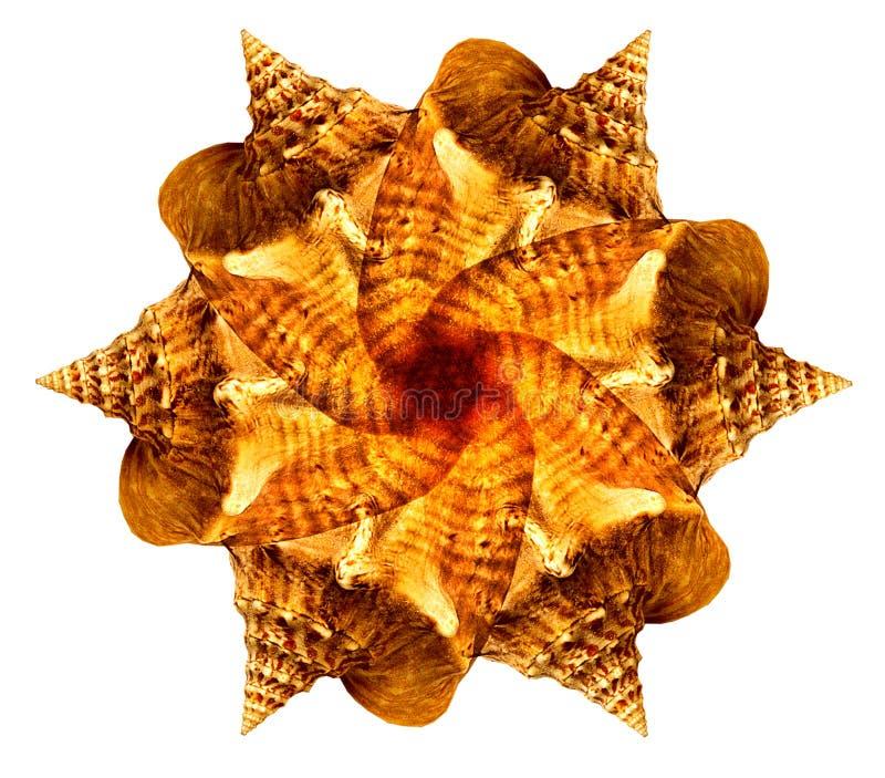 Sea shell mandala. On white background stock photography
