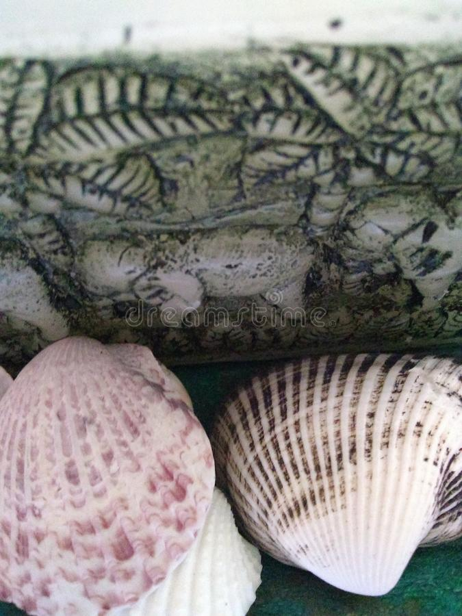 Sea shell. Mystical sea shell stock photography