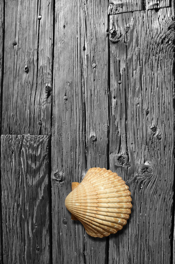 Free Sea Shell On Black And White Wood Board. Stock Photo - 12858980