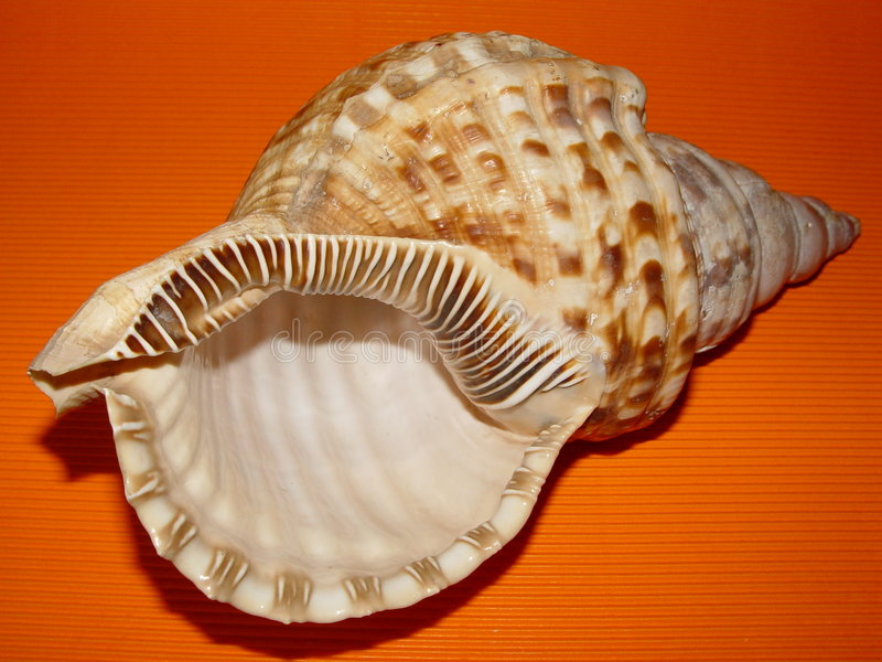 Download Sea Shell On Orange Background Stock Image - Image: 24507