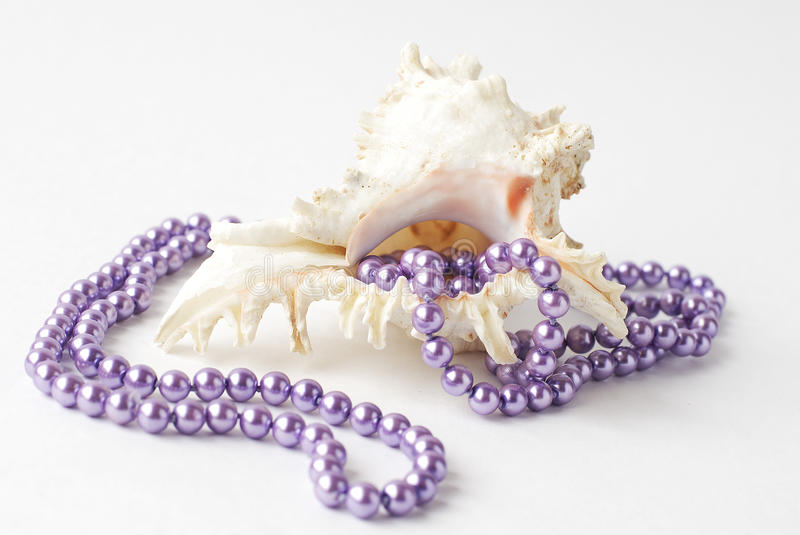 Sea shell and pearls royalty free stock photo