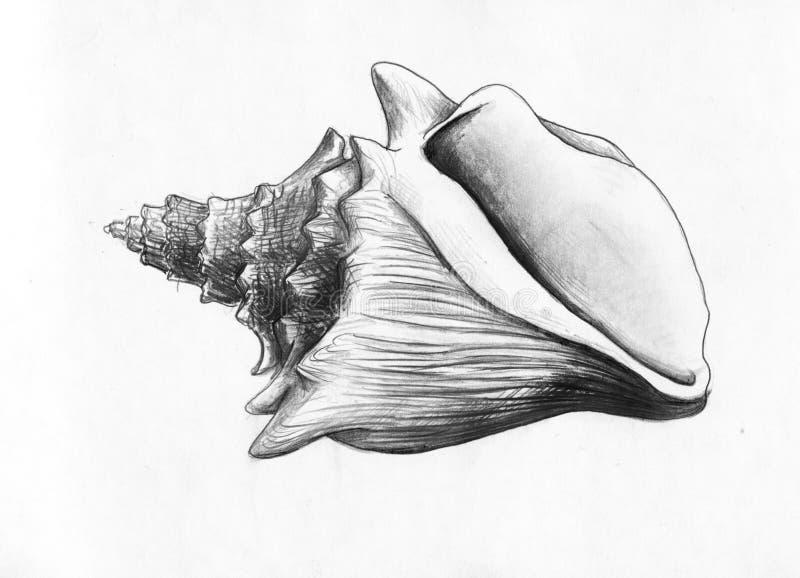 Sea shell - pencil drawing royalty free illustration