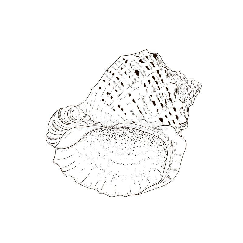 Sea shell rapana venosa isolated on white. stock illustration
