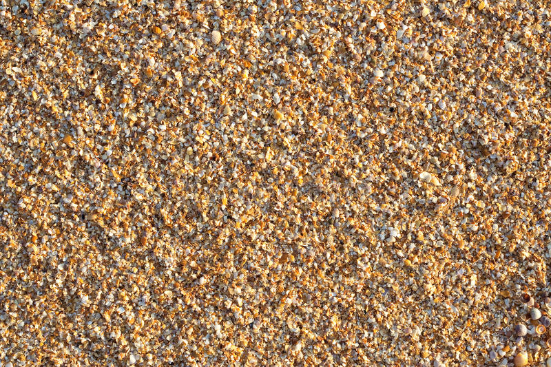 Download Sea shell rock stock image. Image of beach, sand, background - 25871933