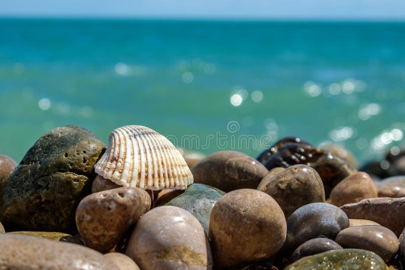Sea shell on rocks at the sea`s pebble beach. The Black sea and blue sky royalty free stock images
