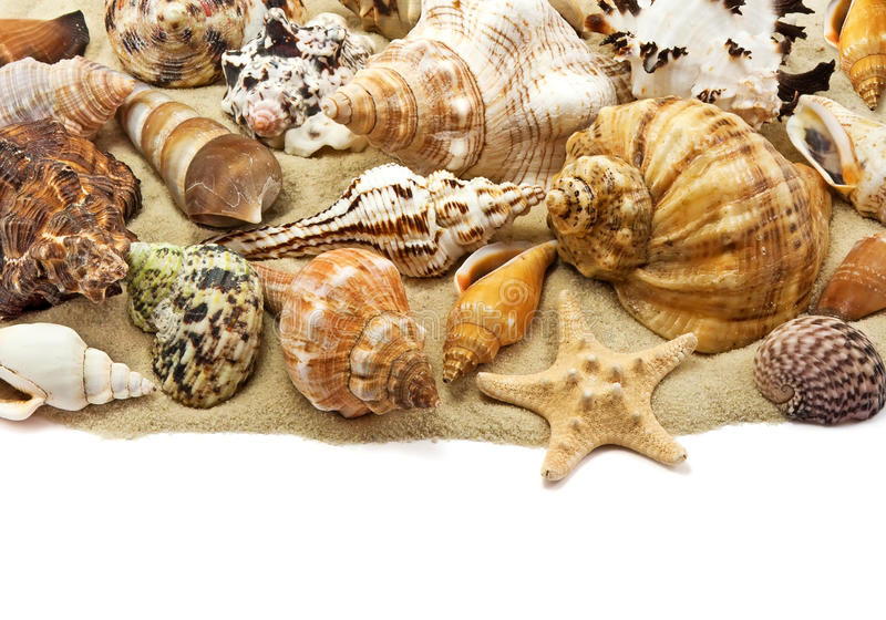 Sea shell on sand royalty free stock photography