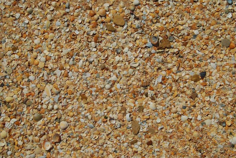 Sea shell sand texture. Summer beach background. royalty free stock photos