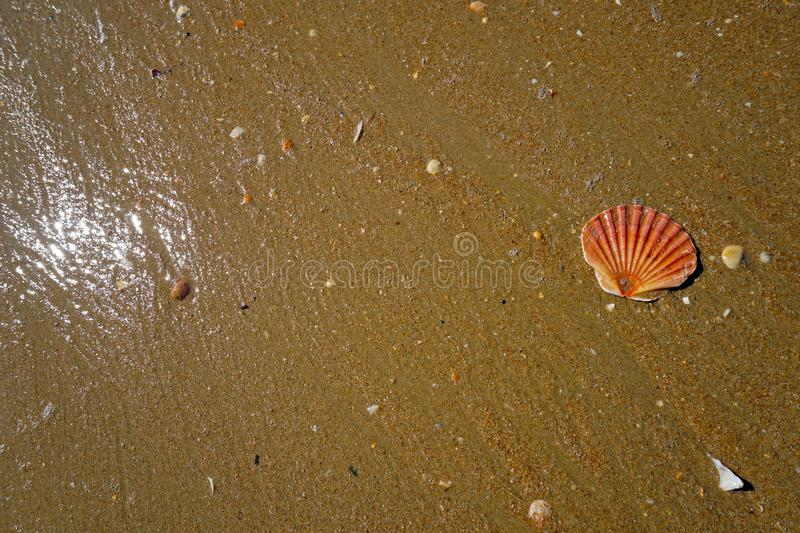 Single sea shell at wet sandy beach with sunlight reflection stock photography