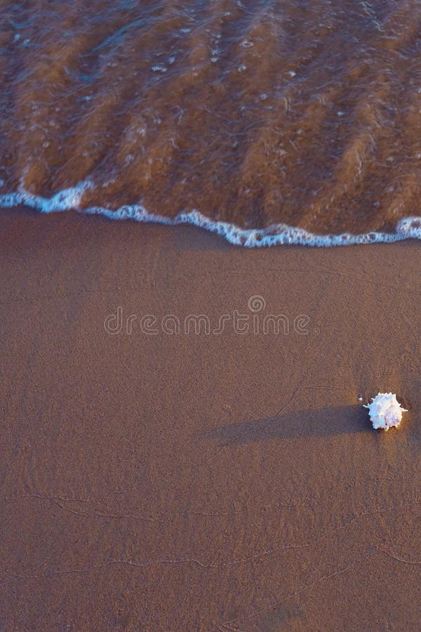 Sea shell on sandy beach. Copy space stock images