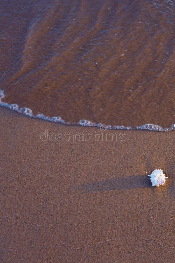 Sea shell on sandy beach. Copy space royalty free stock image