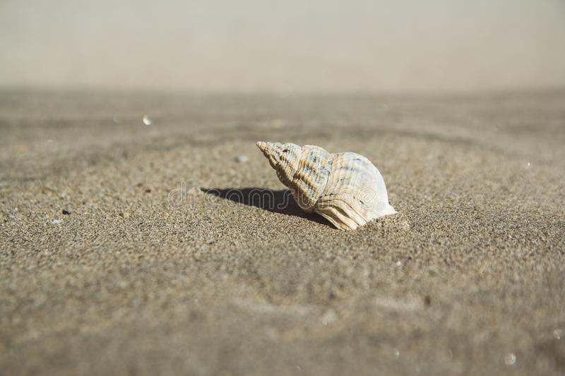 Sea shell on sandy beach. Summer background. Copy space. Can use as banner stock image