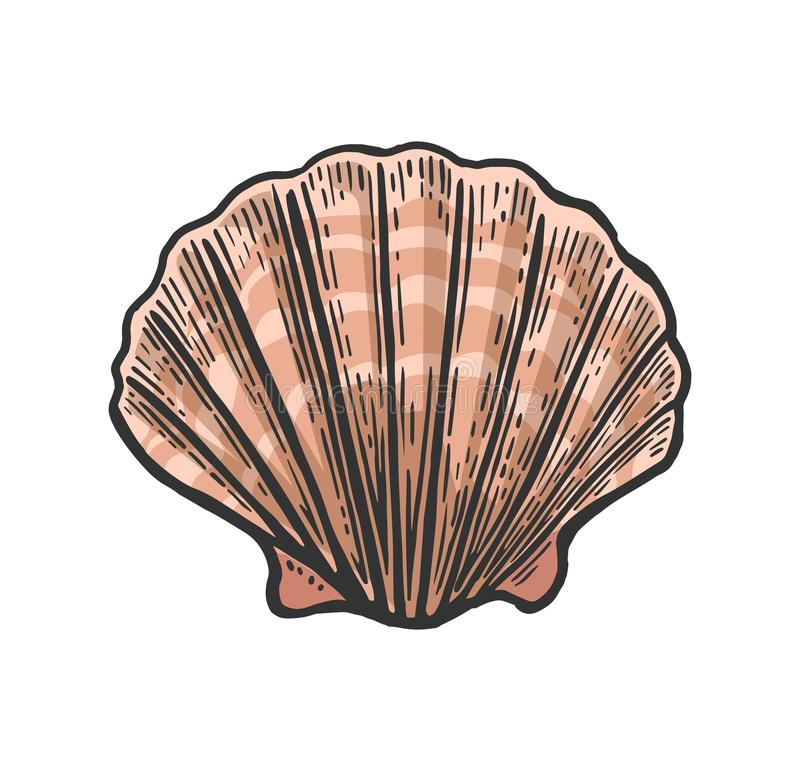 Sea shell Scallop. Black engraving vintage illustration. on white background. royalty free illustration