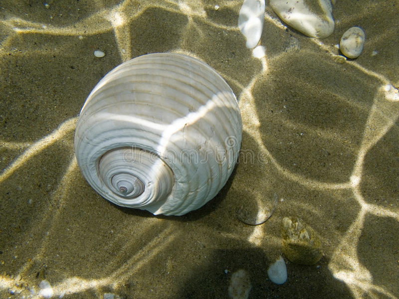 A sea shell  on the sea bed