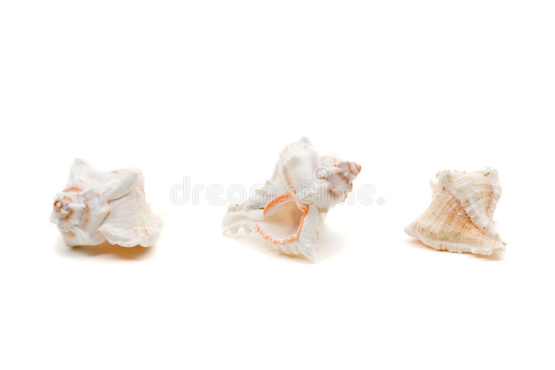 Download Sea shell series stock photo. Image of decoration, background - 14396570