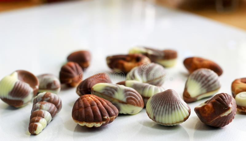 Sea shell shaped assorted belgian chocolates in white background.close up macro image. royalty free stock photography