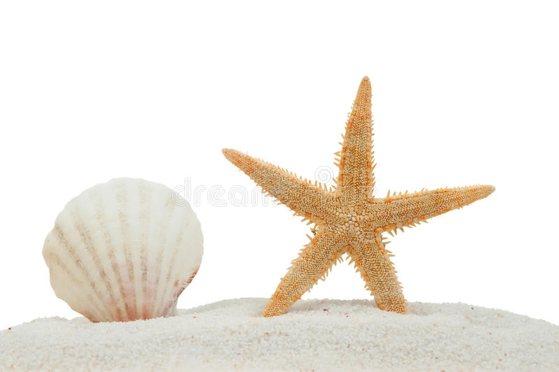 Download Sea Shell And Starfish On Sand Isolated Stock Image - Image of shore, beautiful: 10580435