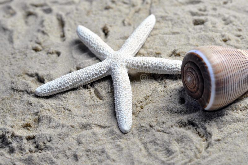 Download A sea shell and starfish stock photo. Image of collection - 36606976