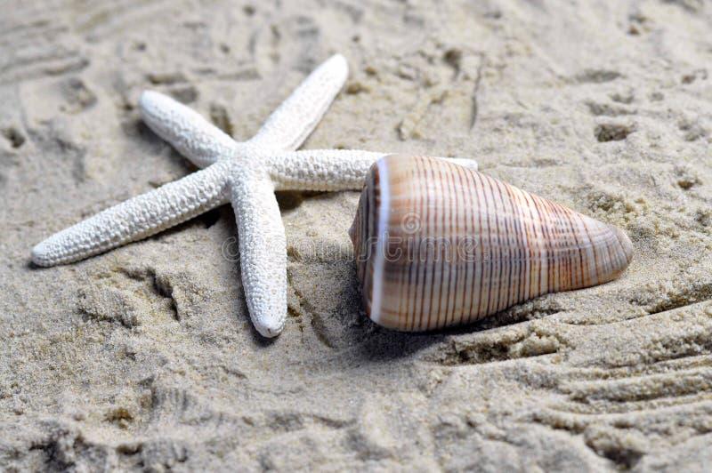 Download A sea shell and starfish stock photo. Image of aquatic - 36606982